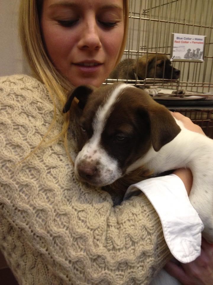 Pet Adoption Long Island Ny