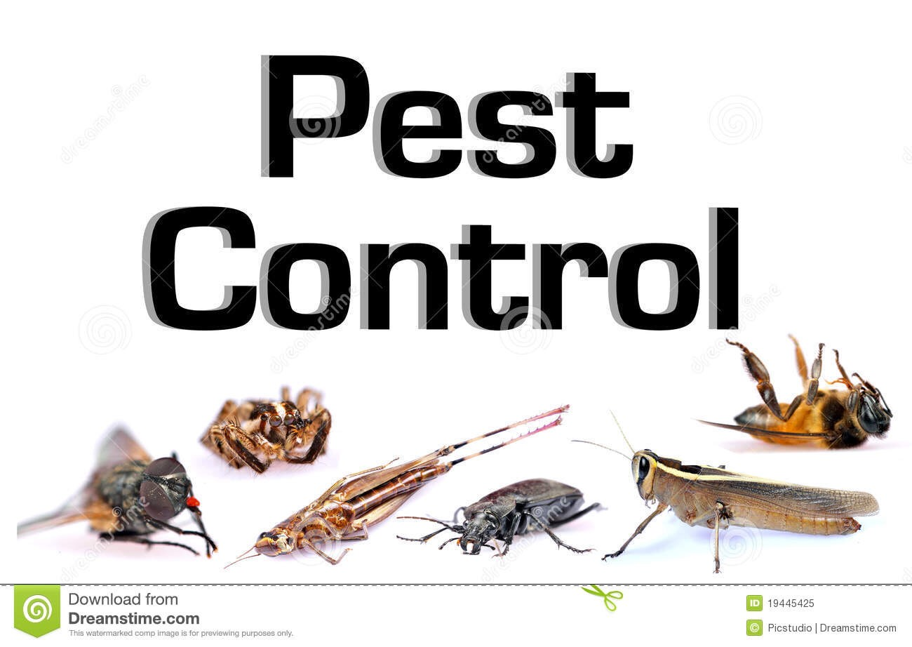 Amazing Pest Control Hacks You All Need To Know