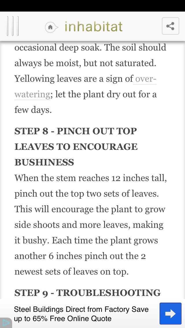 how to grow avocardo seeds