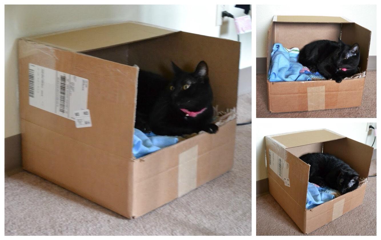 Кровать для котёнка своими руками из коробки