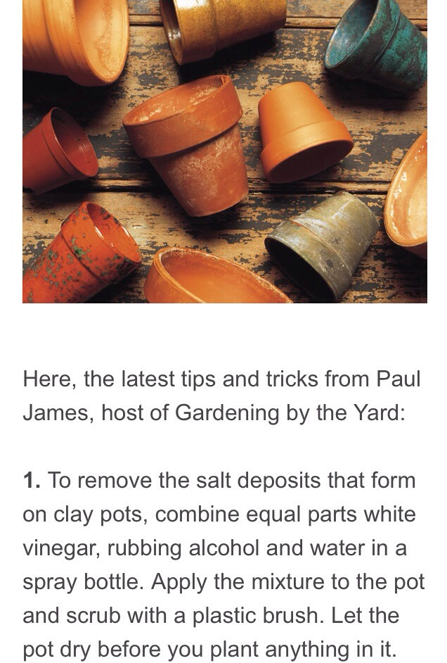 14 simple gardening tips and tricks musely for Minimalist tips and tricks