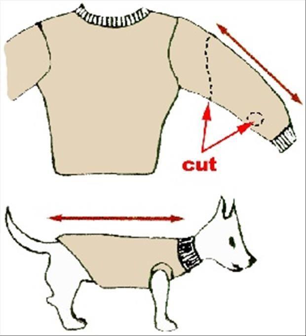 Пошить одежду собаке своими руками