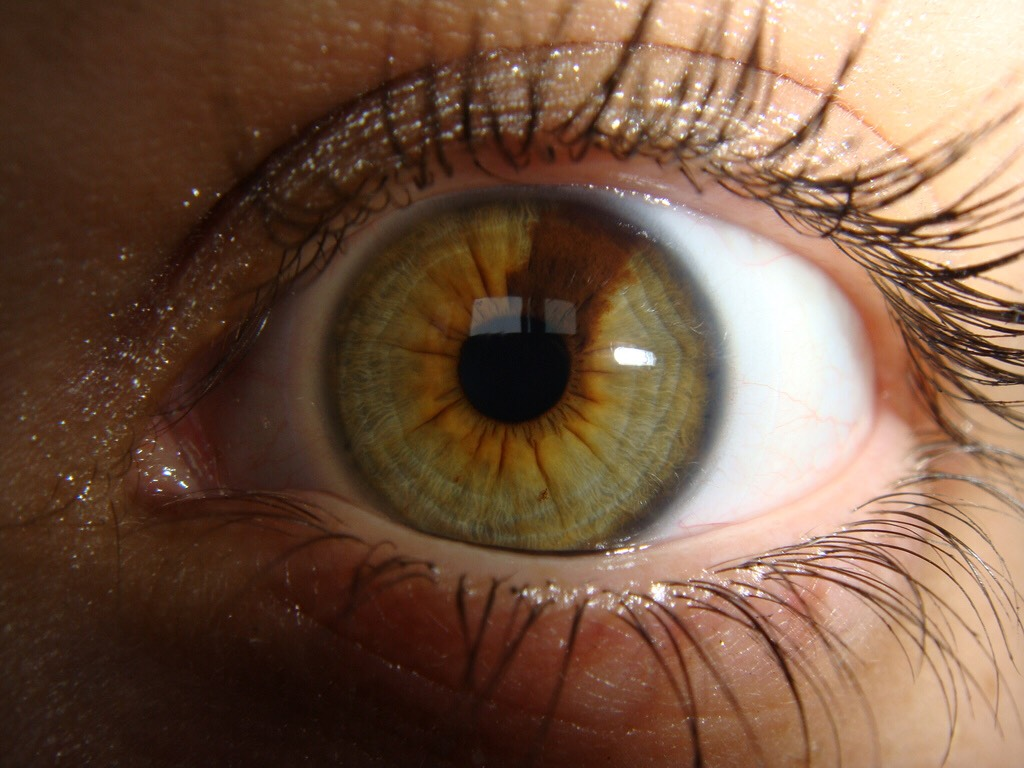 Chestnut eye color wwwgalleryhipcom - the hippest pics
