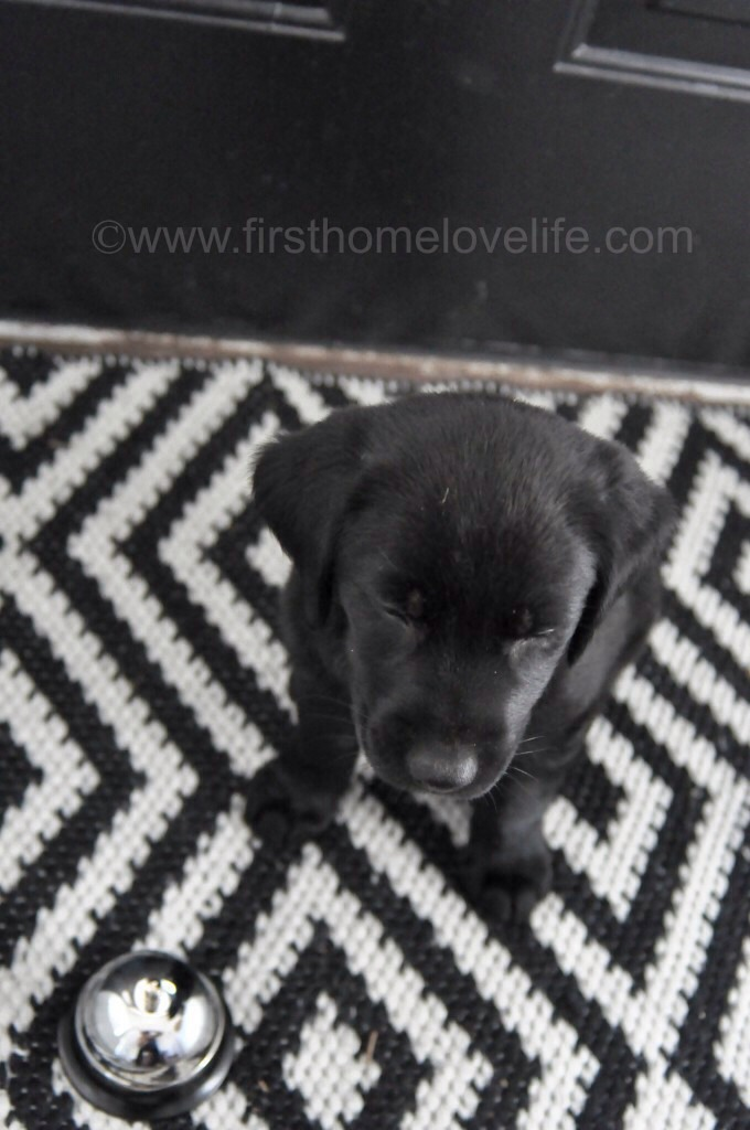 How To Potty Train A Puppy Using A Bell Musely