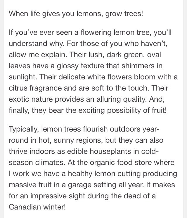 How to grow a lemon tree from seed musely for Can i grow a lemon tree from lemon seeds