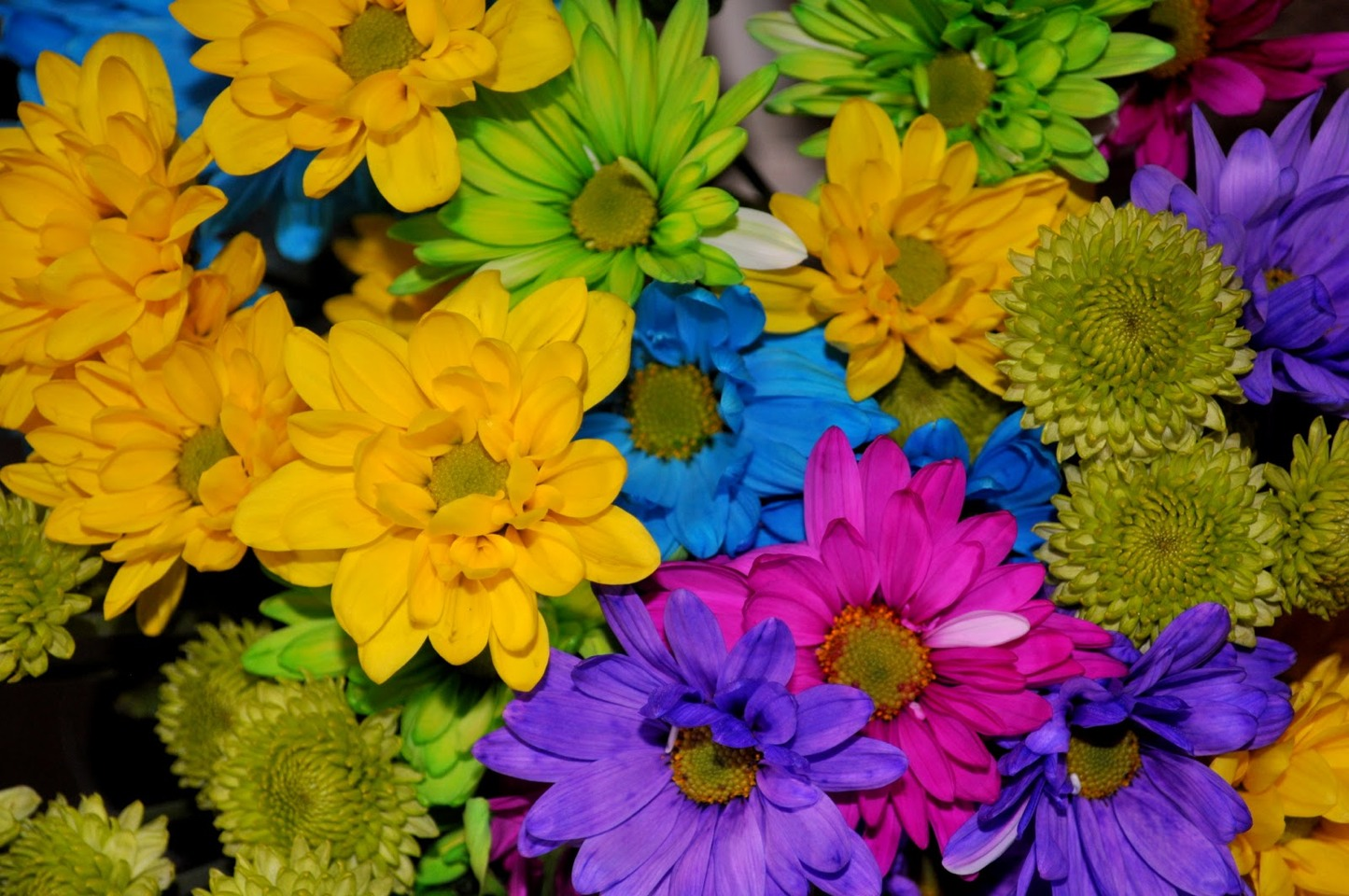 How to dye flowers musely for How to dye flowers using food coloring