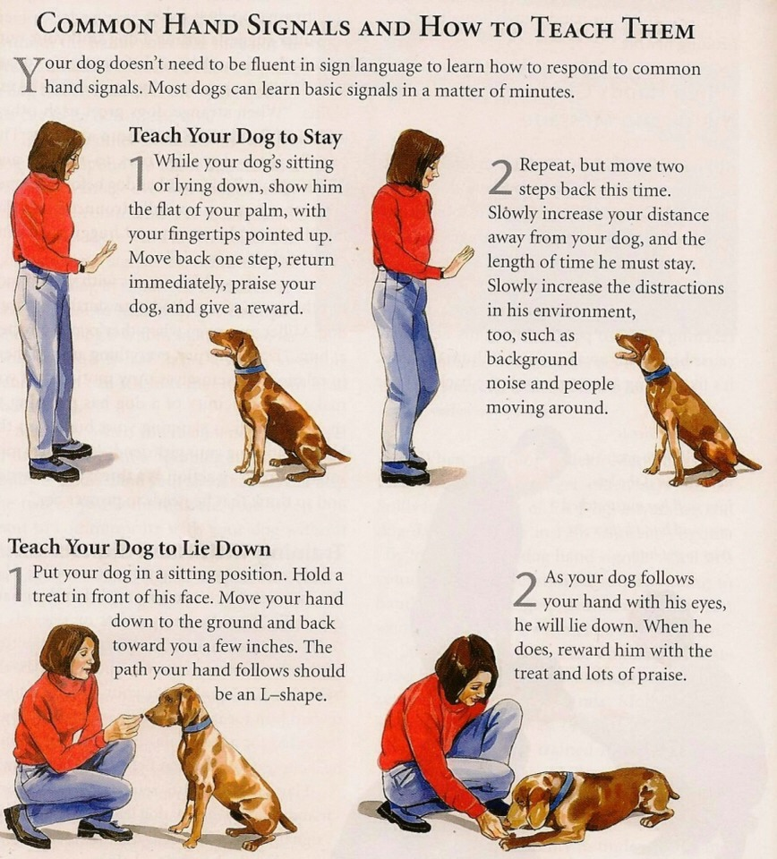 Training Your Dog To Sit Stay Come