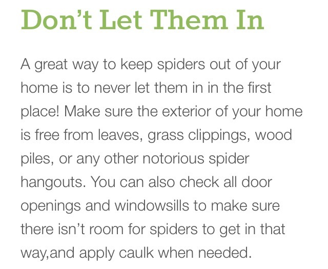 Musely for How to keep spiders out of the house