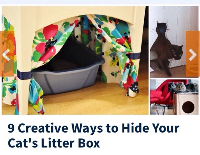 Creative Ways Hide Your Cat Litter Box Musely