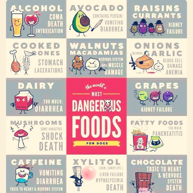 The Most DANGEROUS Foods For Dogs!! ? Must Read !