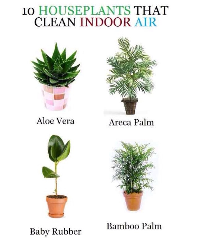 Musely - Name of house plants ...