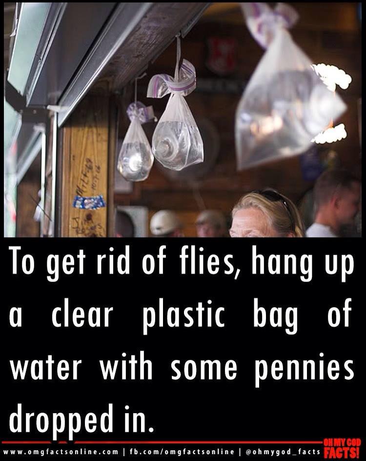 how to get rid of midge flies in garden