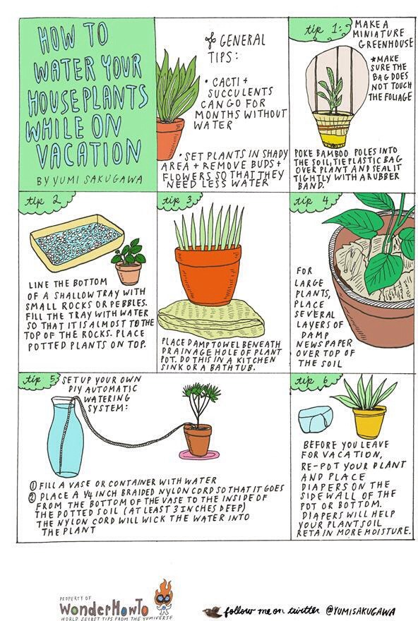 Watering Tips To Plants On Vacation:)