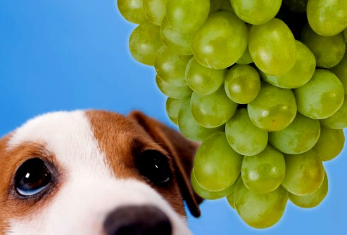 Is Baby Food Good For Dogs With Kidney Failure