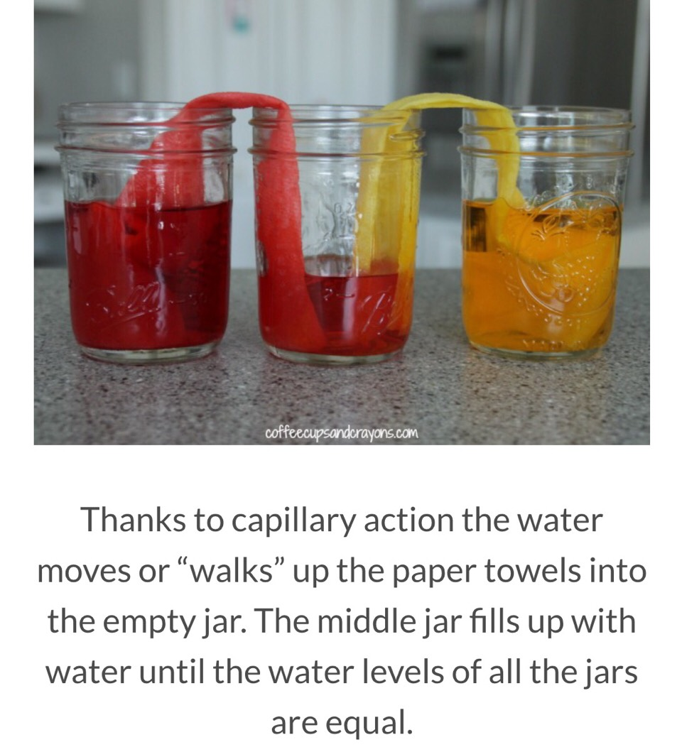 Walking Water Science Experiment For Kids. ud83dude31 - Musely