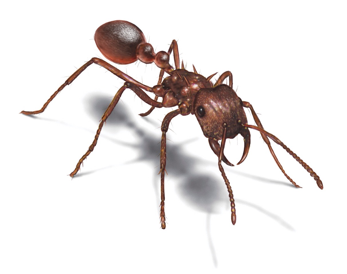 i ants in your house they will not cross flour sprinkle some