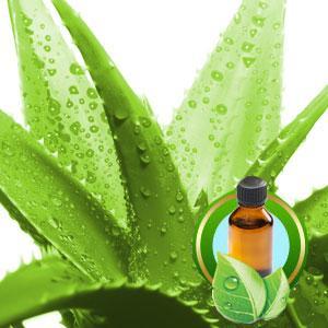 Aloe Vera Oil 8 oz