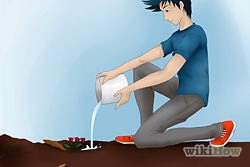 8)Water again until the soil is moist.