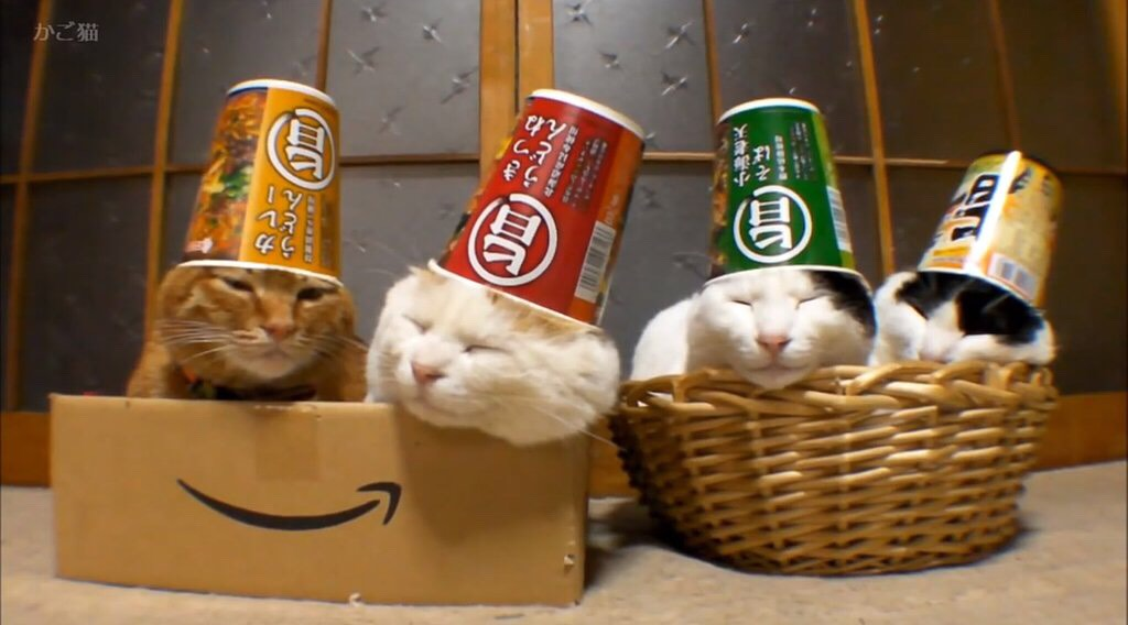 Cats wearing Ramen cup hats.