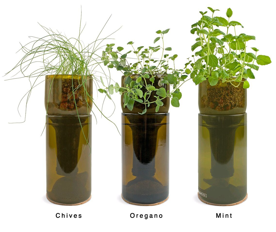 Place the top of the bottle upside down and put it in the bottom half, why not grow some plants.