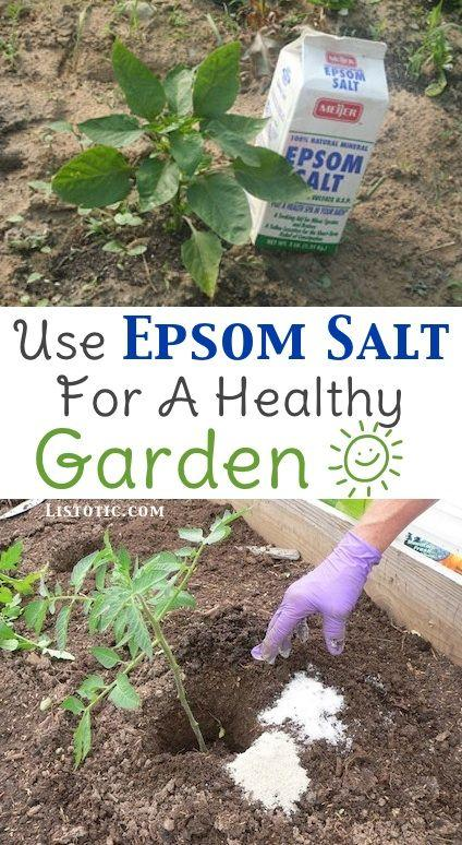 Epsom salt will help your plants germinate better. put one or two tbs in a watering can once or twice a month and your tomatoes and peppers and other plants will prosper from it