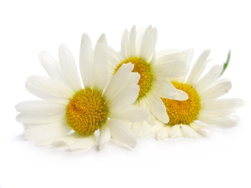 You can also take it as a supplement, typically standardized to contain 1.2% apigenin (an active ingredient), along with dried chamomile flowers.   PLEASE LIKE and FOLLOW :-)