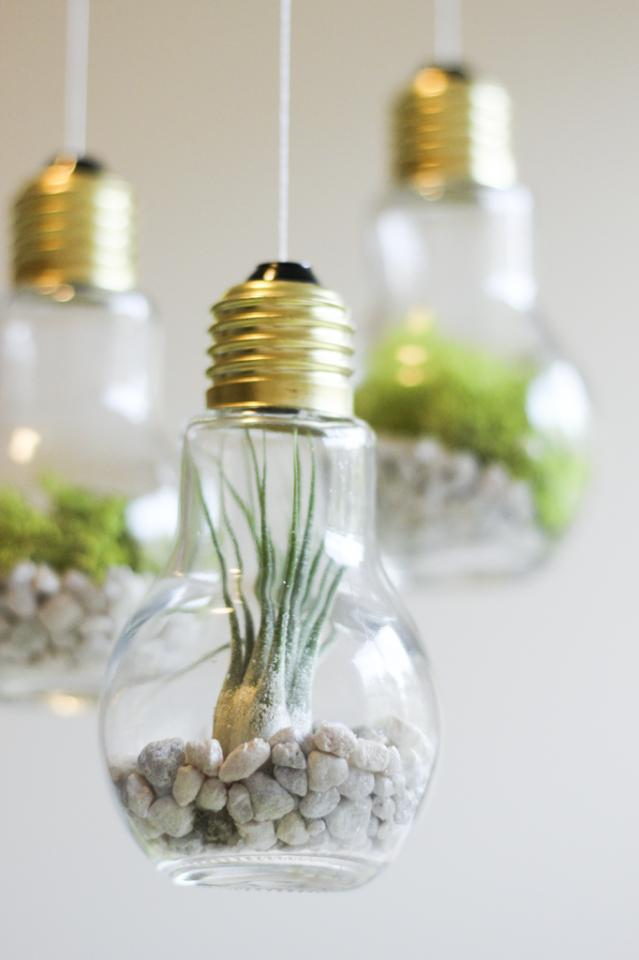 lovely hang in terrariums out of light bulbs. These look so beautiful hung in a group, and they make great gifts as well! If you love succulents, you've got to try this!