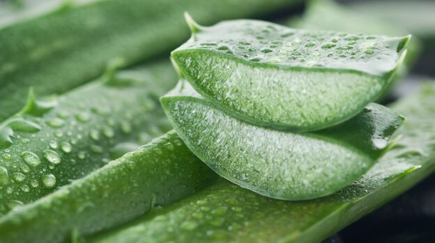 This is aloe, your new best friend.
