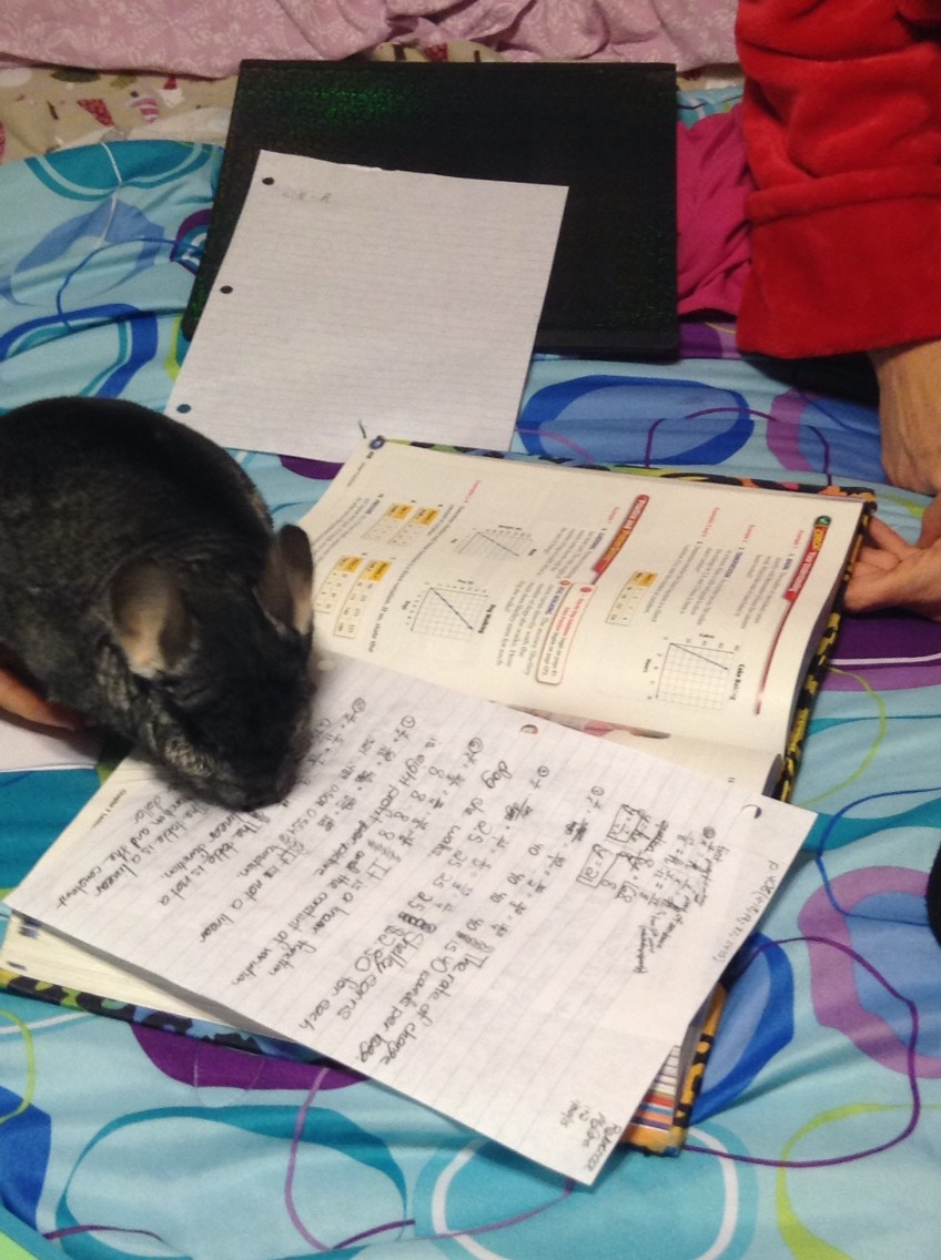 The chinchilla does your homework! 😱 Jk! 😋