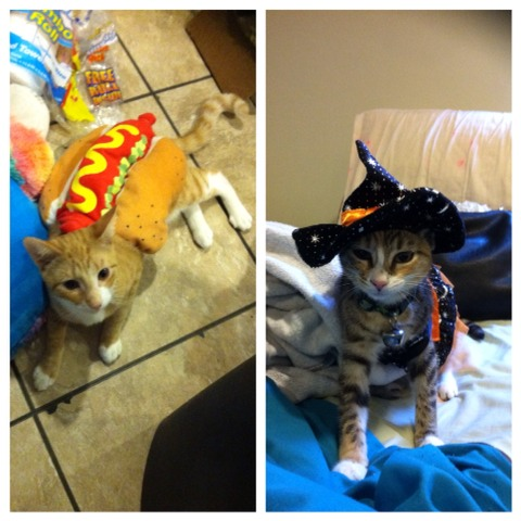 If you feel like your too old to dress up or can't afford to buy a costume and don't have time to make one you can still get your fix with costumes for your pets!  I got these 2 adorable costumes from Marshalls for $6 each!  Your animals will look so cute like my babies!  :)