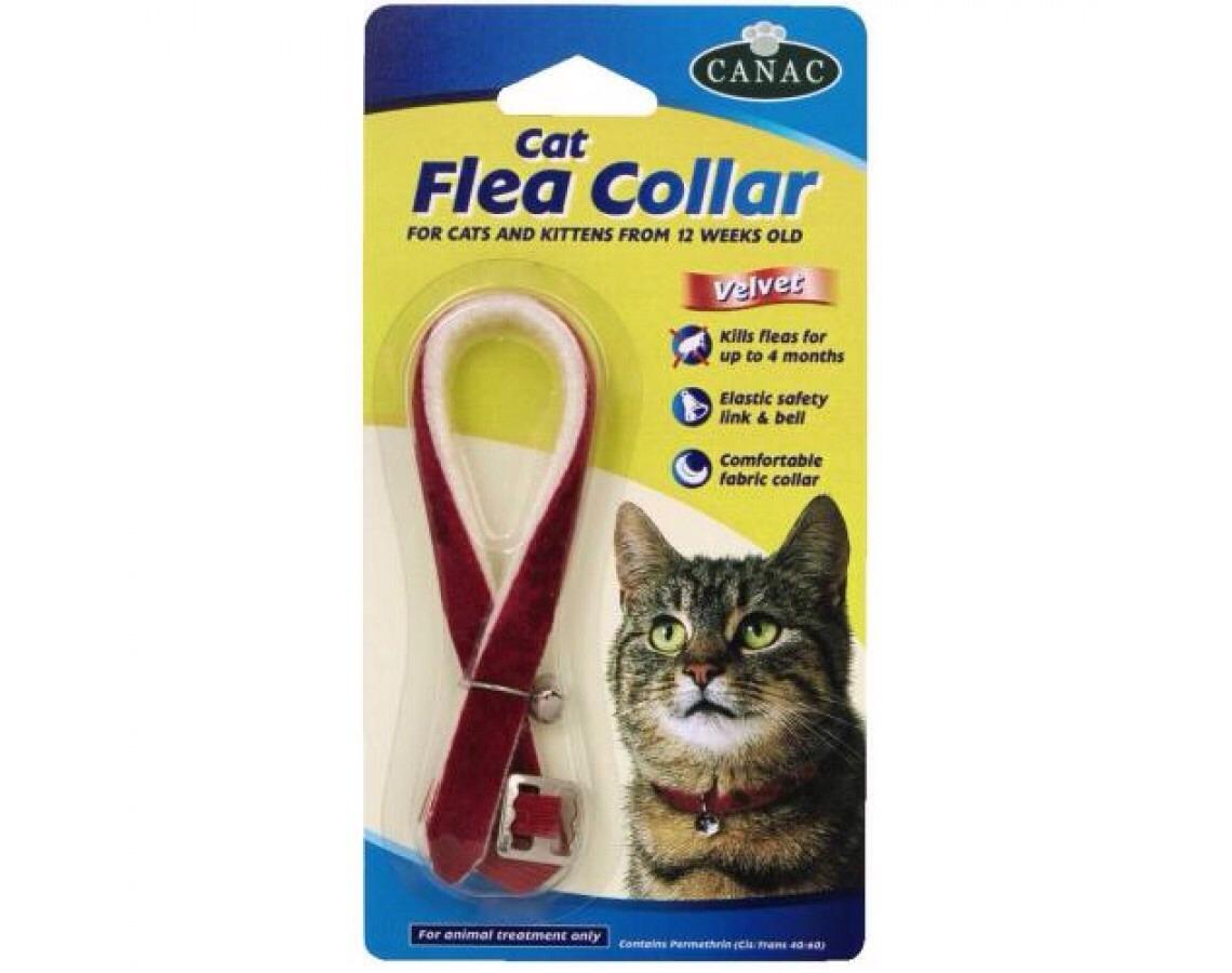 best flea for cats