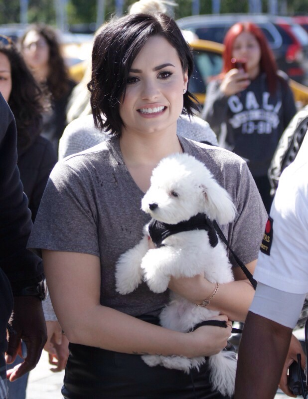 Demi's dog Buddy for killed by a coyote😔
