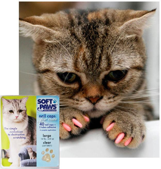 16. Don't de-claw your cats! If your cat is regularly drawing blood, cover his paws with Soft Paw vinyl coverings for their paws. You can buy them here. https://www.softpaws.com/
