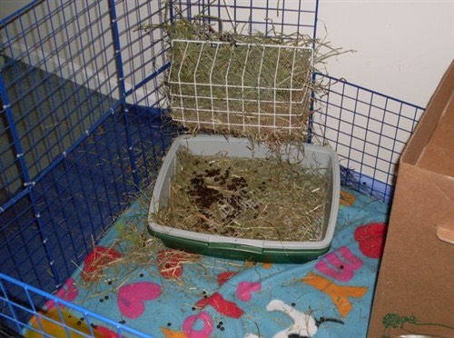 FEEDING YOUR BUNNY PROPERLY:  Hay is 90% of their diet, the rest is rabbit food. Feed your rabbit once a day with rabbit food, and make sure to have enough hay in their cage for the entire day. If running low refill.