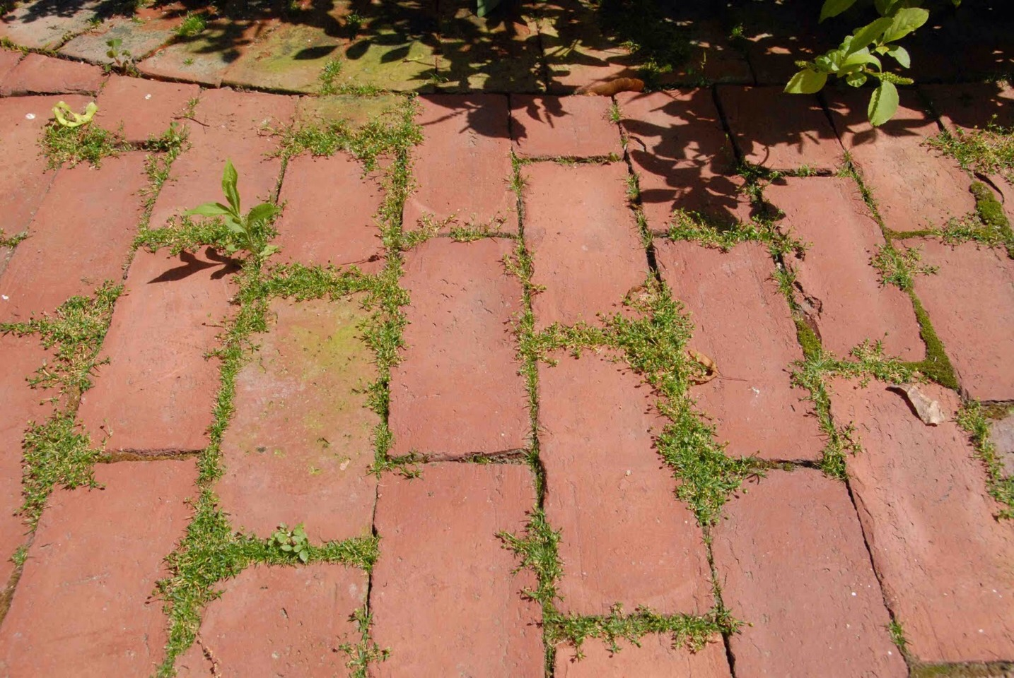Deter patio weeds. If weeds or grass grow between bricks or blocks in your patio, sidewalk, or driveway, carefully spread salt between the cracks, then sprinkle with water or wait for rain to wet it down.