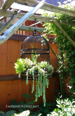 Use an old birdcage and add spotted plant