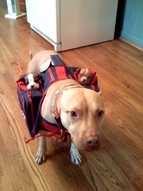 17.Puppy carrier Have more than one puppy? Carry them all with the puppy carrier to save you trips! $21.90