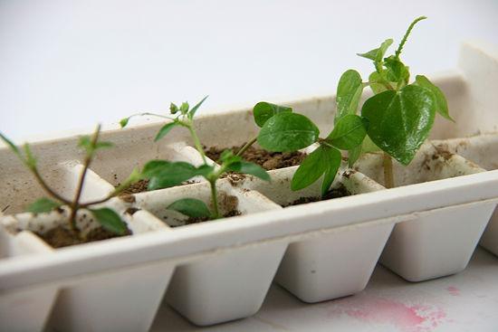 Grow small plants