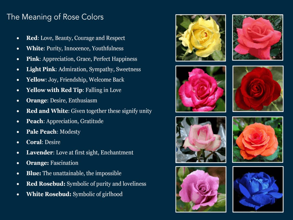 Rainbow Rose Meaning Hd Image Flower And Xmjunci