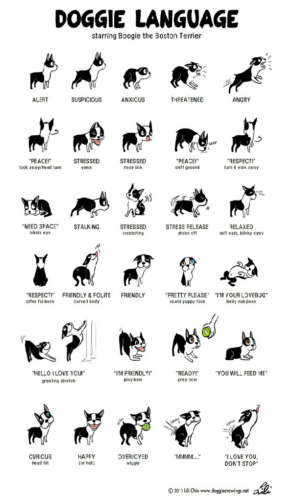 What your dog is trying to tell you. ♥♡ please like and save :)