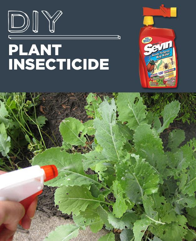 7. DIY Plant Insecticide  Homemade Insecticidal Soap   Make the base: 1 head of garlic 1 tablespoon red pepper flakes 1 cup water  Make a batch of insecticidal soap: 2 tablespoons base mixture (above recipe)  1/2 teaspoon liquid dish soap 2 cups water   garlic & red pepper deter bunnies