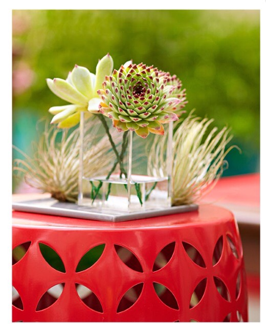 Standout Stand The vibrant steel plant stand features an eye-catching design and adds dramatic color to the space. We topped it with an attractive Echeveria cutting and air plants.