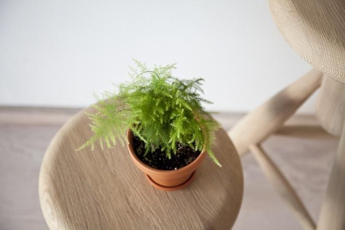 Now get some super small plants  Sticks  Flowers  Grass  Leaves Twigs  Anything!!! That's a plant of course....😄😁