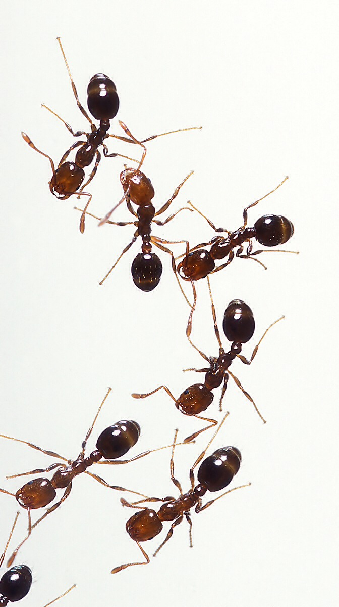 Ants are annoying and seem to find any way Into your house. Read next page to see what I did to help rid of them.
