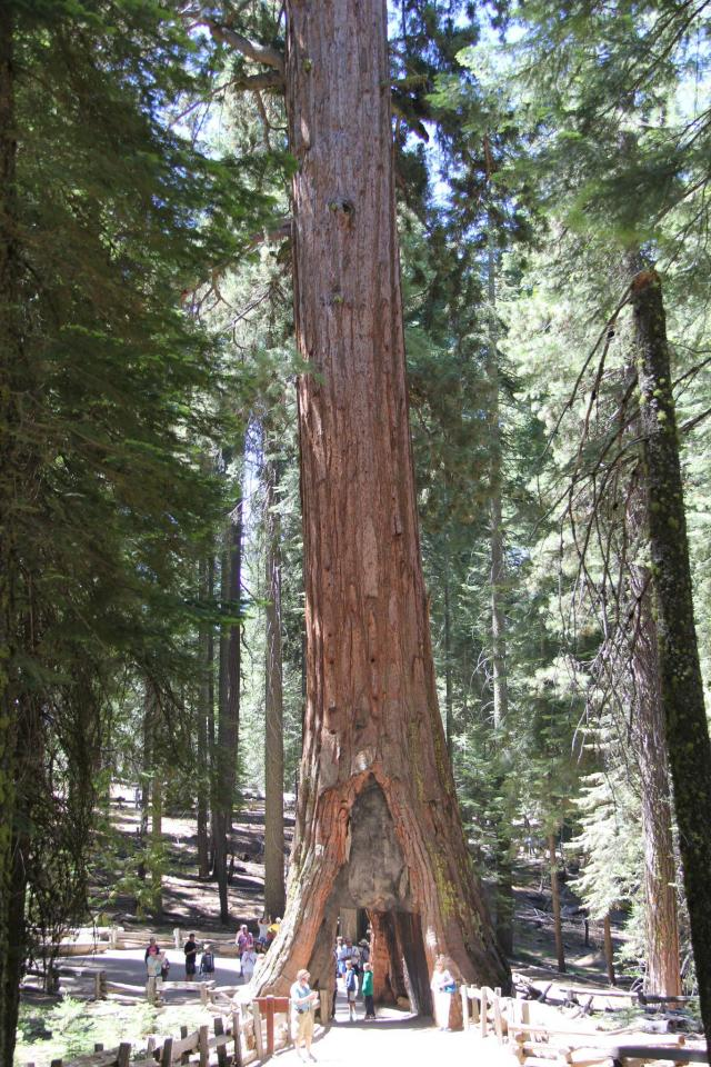 Sequoia Forrest, Yosemite National Park