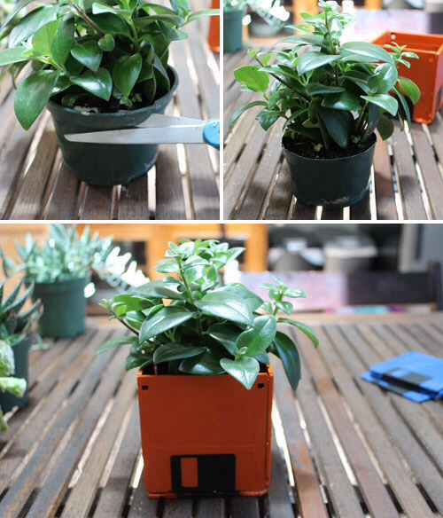 Cut out the plant a bit and place it inside Floppy Disk Planter