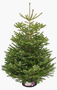 So for all those families with real Christmas trees.....I learned something interesting from the farmer and his wife. Before watering your tree......boil the water first, let stand for 5 minutes and then water tree! This with keep the sap from getting hard and allow for the water to go up the bark!