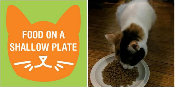 3. PROBLEM: My cat eats too quickly and then throws up! SOLUTION: Place dry cat food on a shallow plate. The shallow layer of food stops your cat from digging their entire face into food.