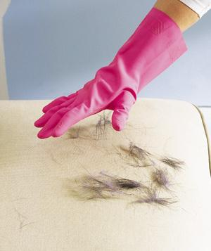 10. To remove pet hair from upholstery, dampen a rubber glove and run your gloved hand over it. The latex/rubber will attract the hair.