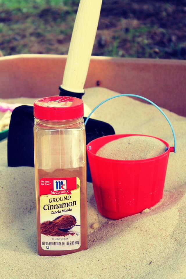 Did you know cinnamon will keep bugs out of your sand box?
